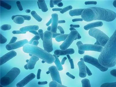 婴幼儿益生菌的优势分析